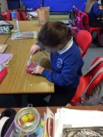 P5 Learn All about Birds and Flight